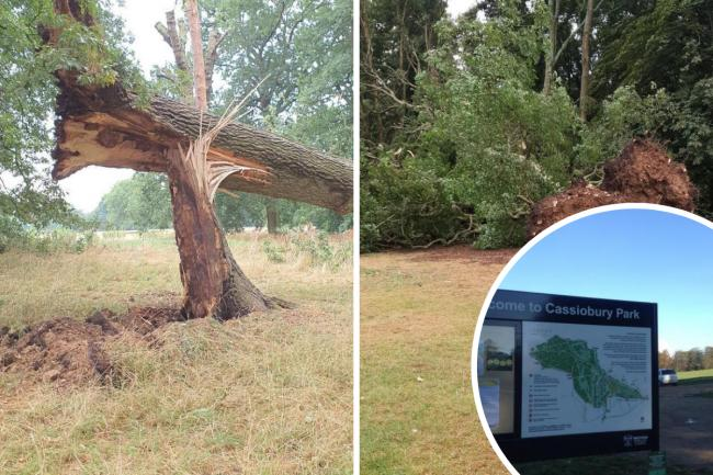 Cassiobury Park has been temporarily closed (Tree photos from Friends of Cassiobury Park)