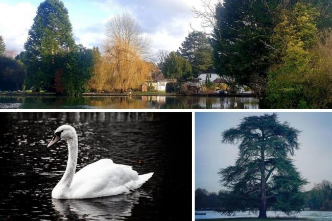 Some of this weeks Watford Observer Camera Club photos
