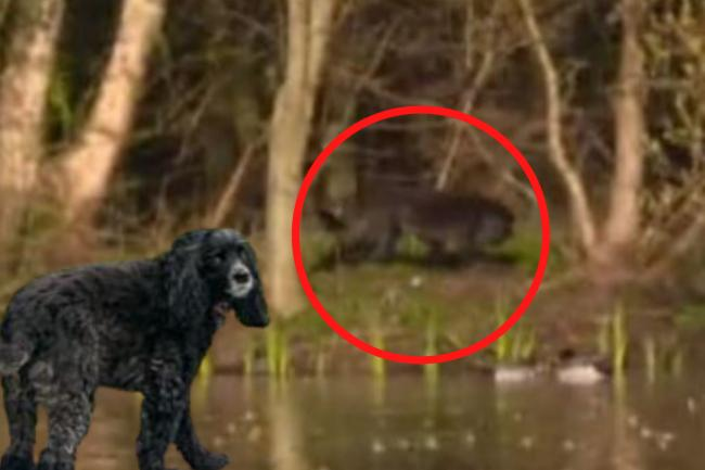 GMB viewers thought the animal circled right may have been a 'big cat' but it turned out to be Coco (left). Credit: ITV/Sarah Collins