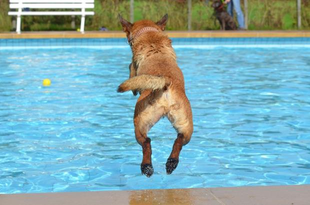Hillingdon Times: A dog leaping into water