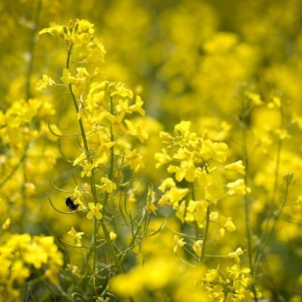 Hillingdon Times: Hay fever is caused by allergy to pollens
