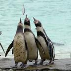 Hillingdon Times: A story about a penguin has won a literary prize