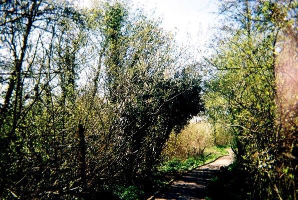 Beware if you dare: The woods on Hanger Lane