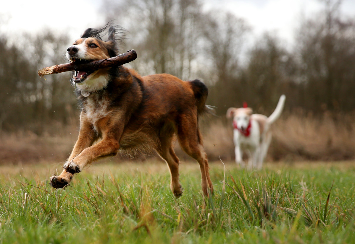 Events this weekend include the Great British Dog Walk